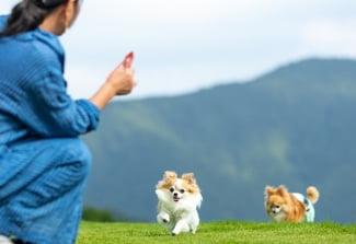 犬が遊んでいる写真2