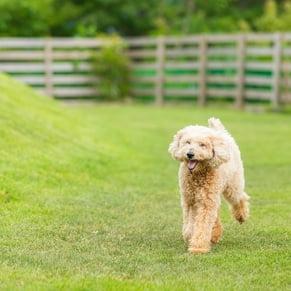 広大な敷地 犬走っている写真