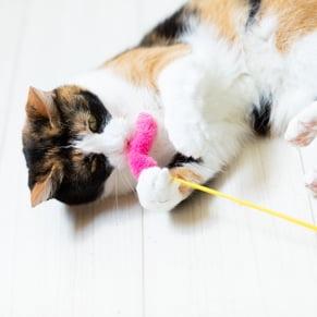 ストレスのない環境 猫じゃらし写真