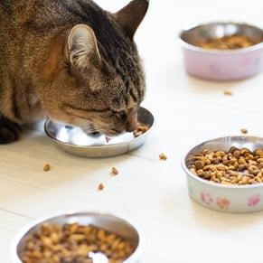 猫 ごはん食べている写真