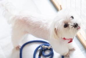 犬 イメージ写真