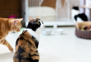 猫 イメージ写真
