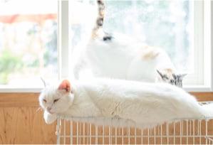 猫 寝ている写真