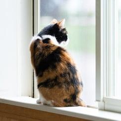 猫イメージ写真