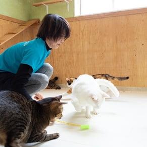 猫 遊んでいる写真