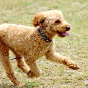 犬 遊んでいる写真