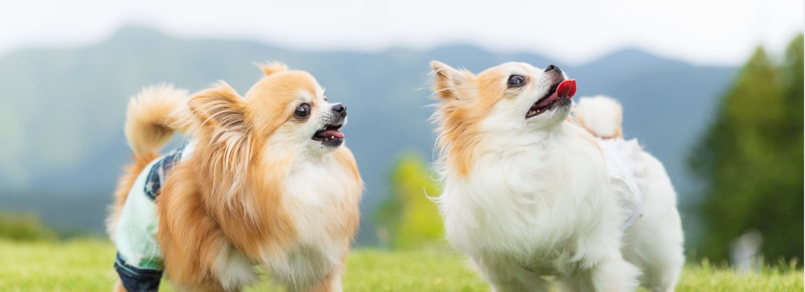 トップメインイメージ 犬の写真
