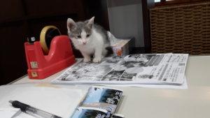 猫の・・のん様・・もう時期1歳