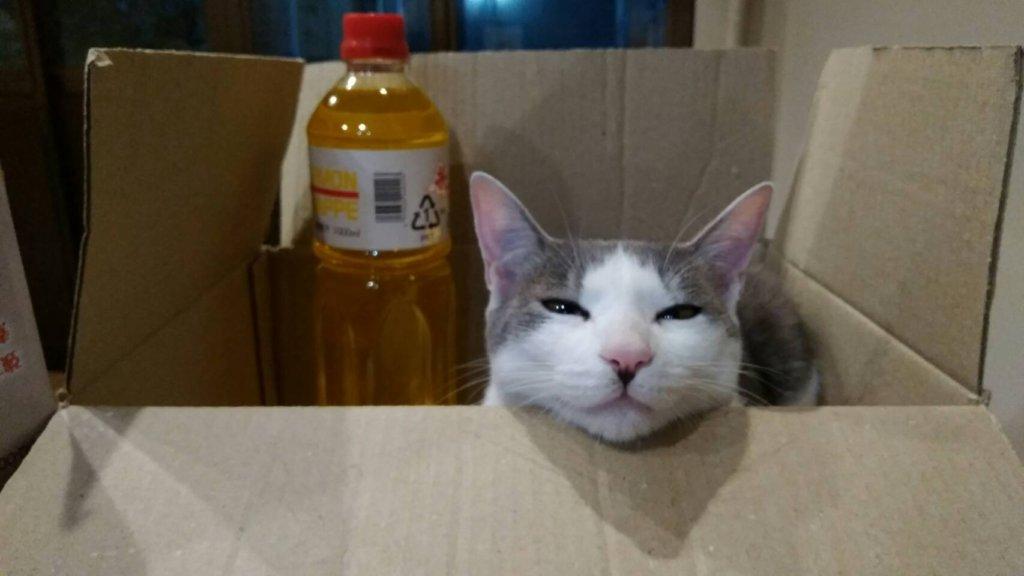 かんばん猫ののんです。。