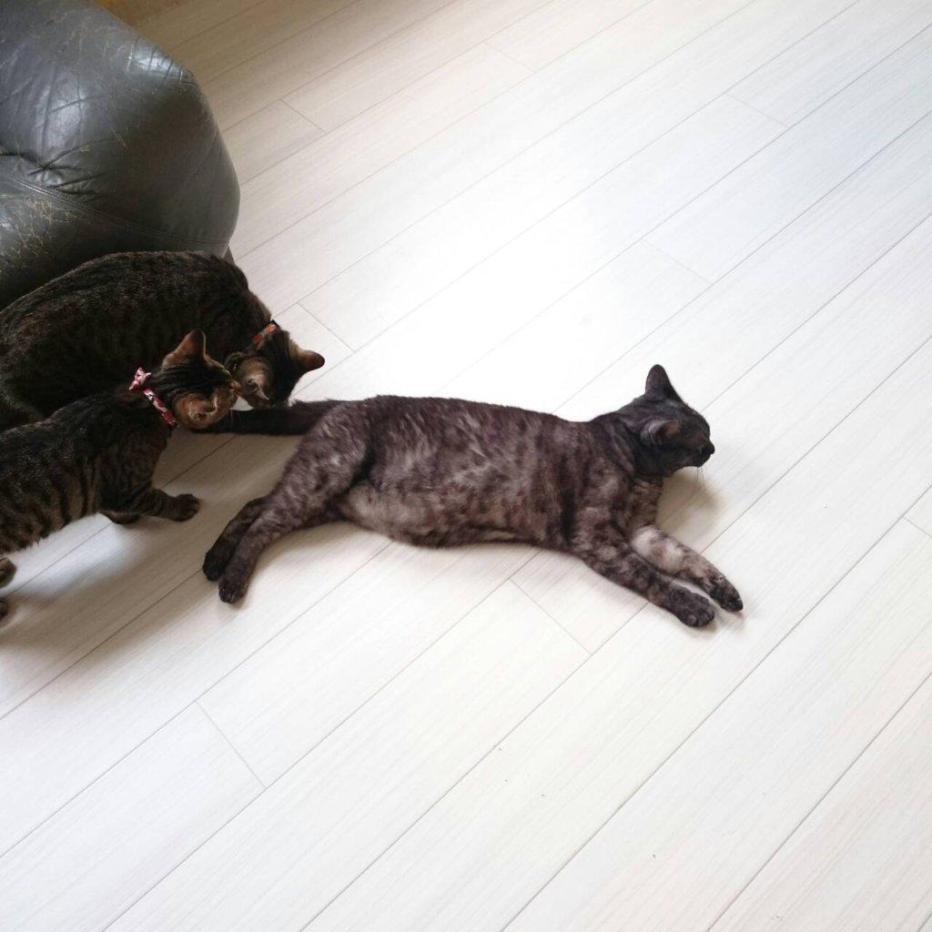 猫友3匹はとっても仲良し