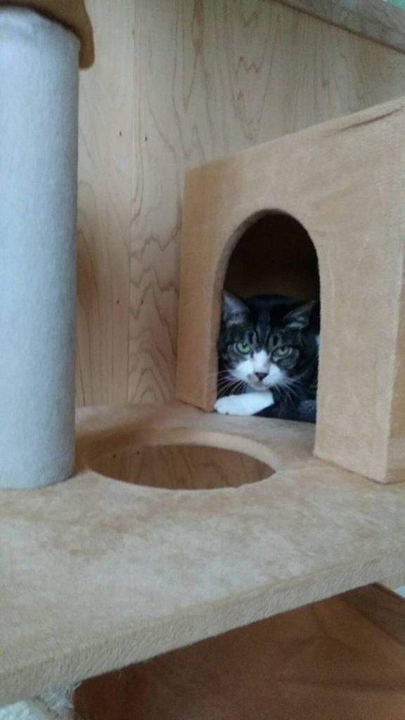 猫の私は・・東京からお泊り中の見返り美猫