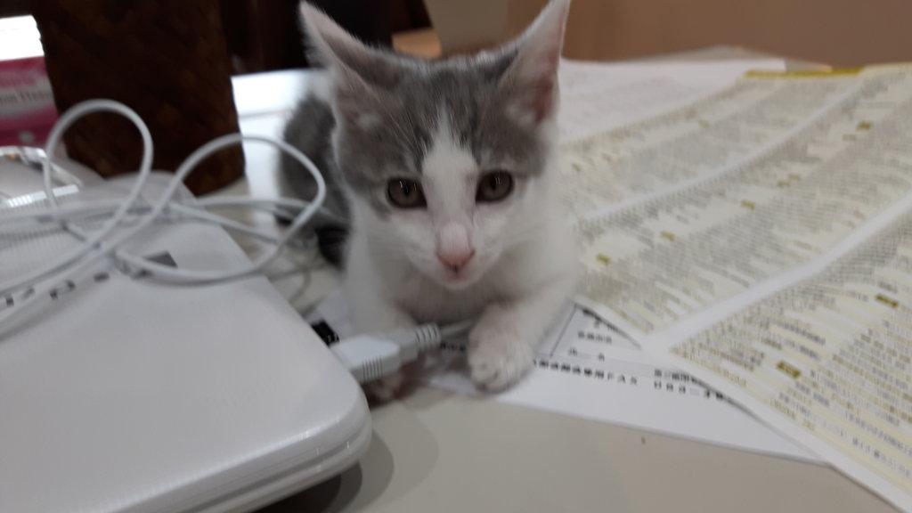 子猫ちゃんから・・猫娘に・・・