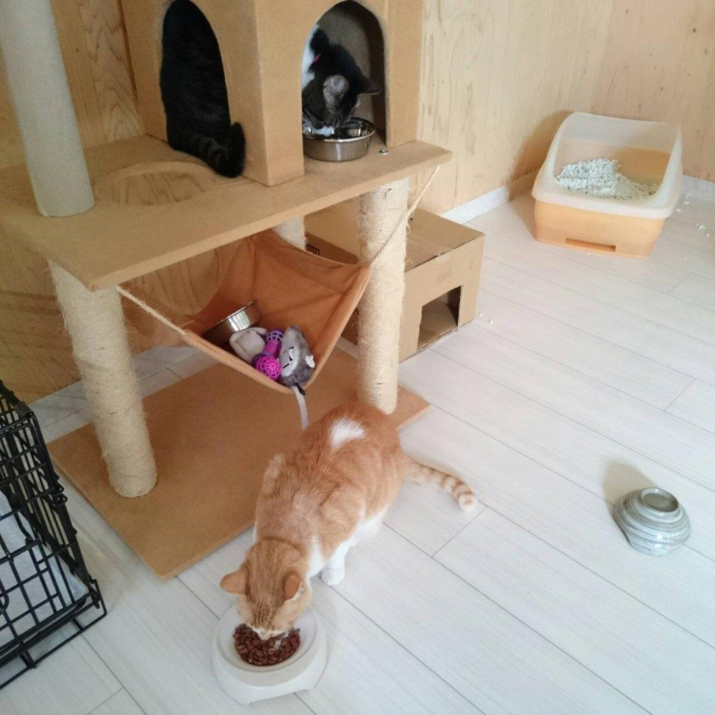 いたずら猫ちゃん達のお食事タイム