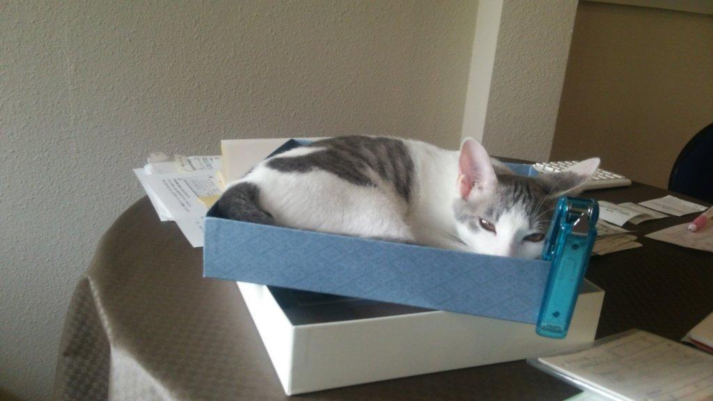 いたずら猫は、箱が好き