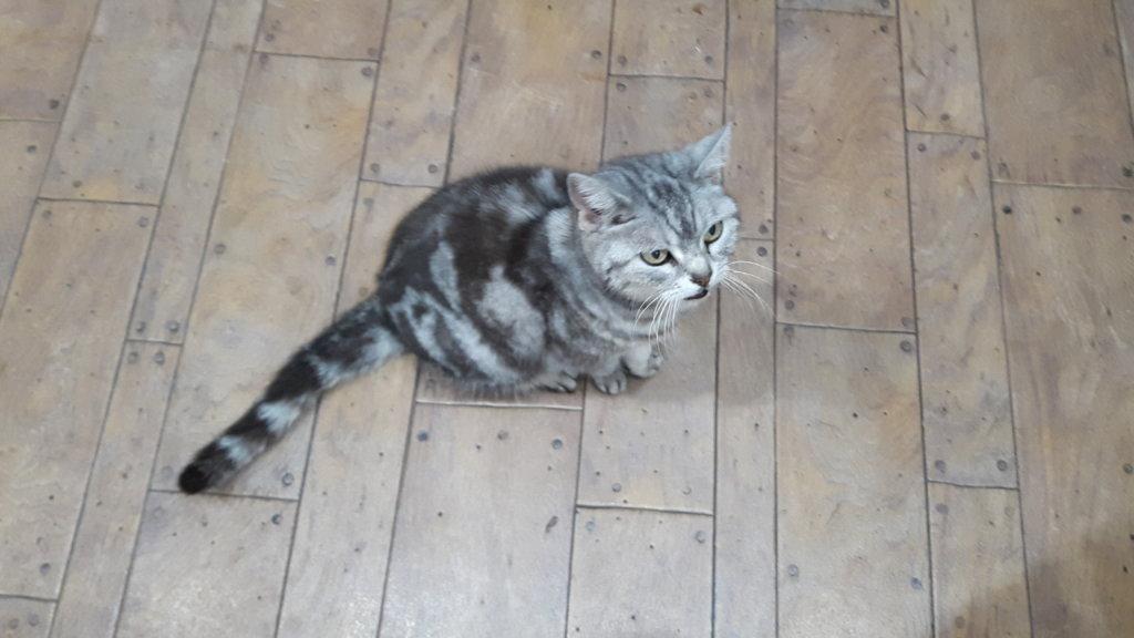 大阪からお越しの猫のミーコ様