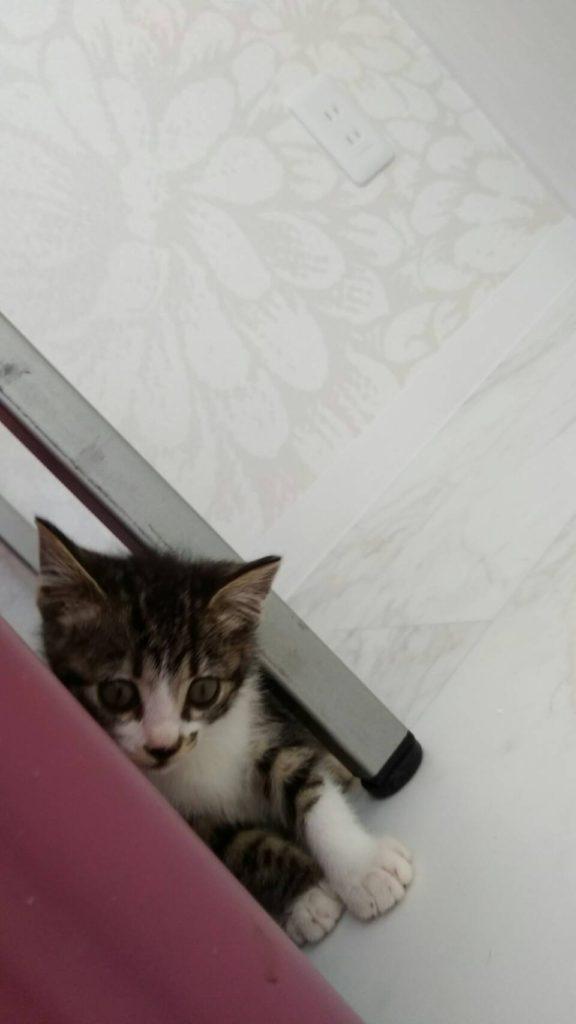 猫のシオンちゃんはおちゃめさん