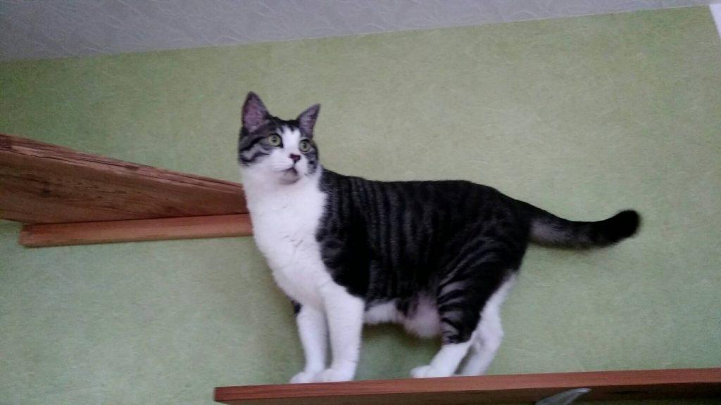 私は東京見返り美人のネコちゃん