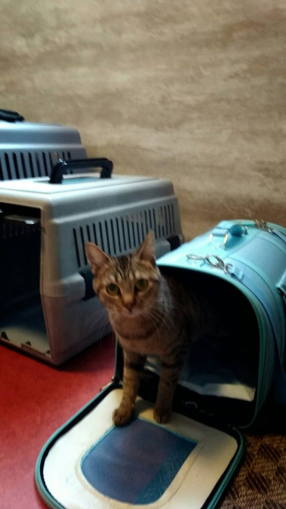 長期お預かりの猫ちゃん 名古屋からいらっしゃいました