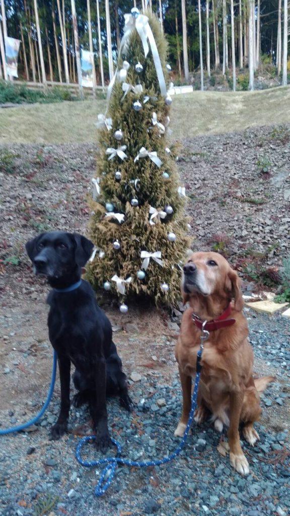 ドッグランの横に・クリスマスツリー