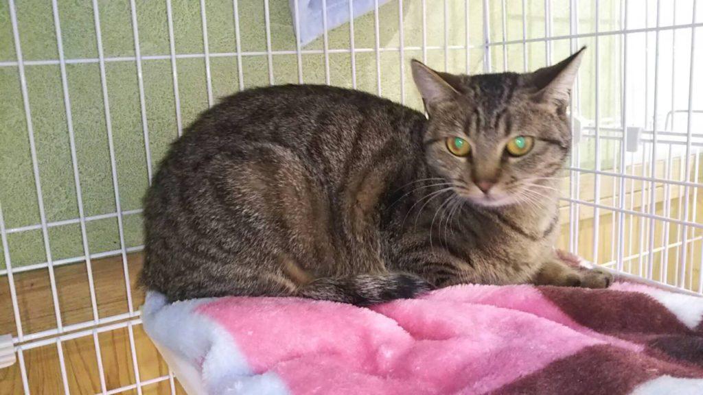 名古屋市からやって来た猫のお豆ちゃん