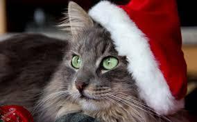 初めてのクリスマス D.C.キャッスル