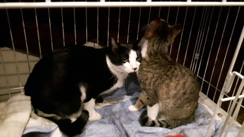 東京都杉並区から姉弟の猫ちゃん達がやってきた !