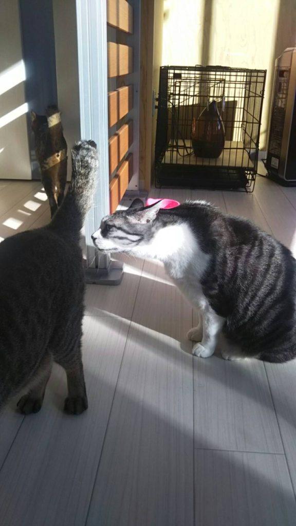 お預かり中の猫ちゃん達の仲良し健康チェック