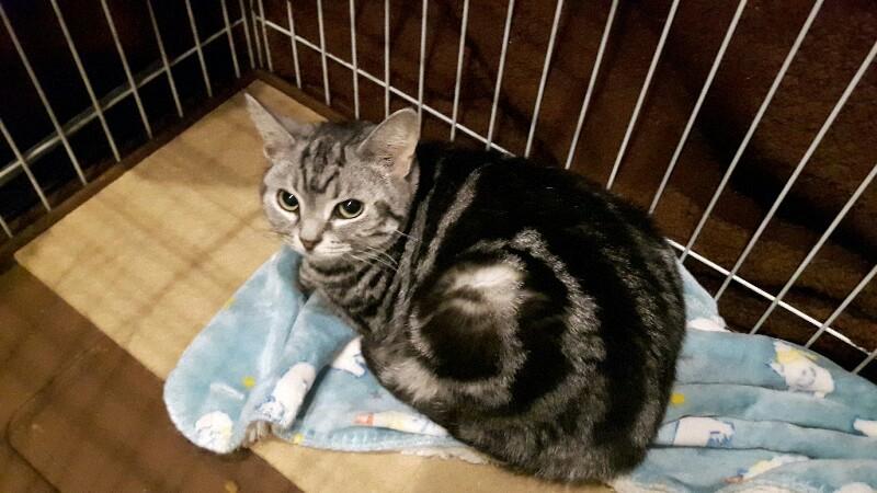 浜松出身 猫のミントちゃん