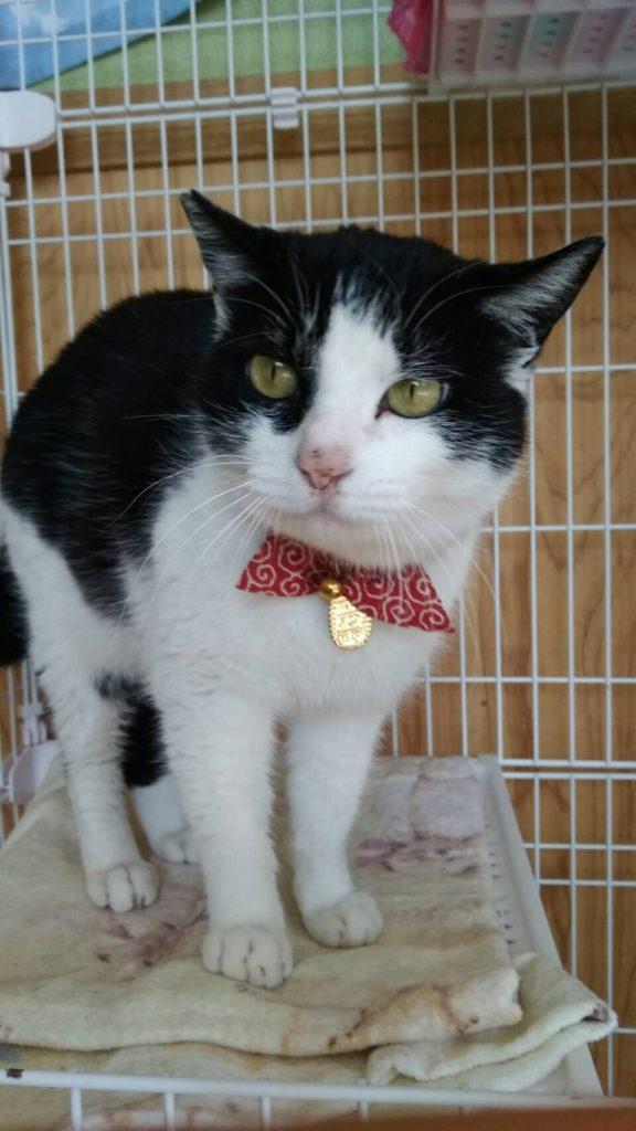 猫のオレオちゃん ネックレスは小判 !