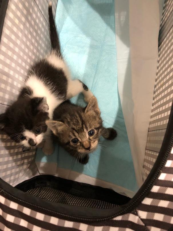 生後1ヶ月の子猫ちゃん ホテル預かり中