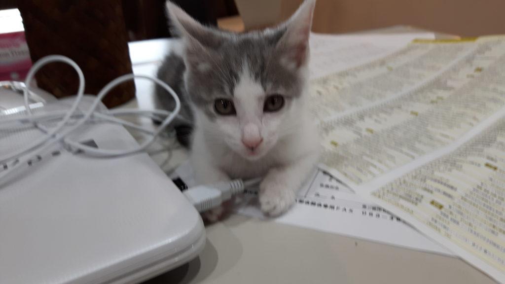 猫ちゃんのなめなめの理由って ?