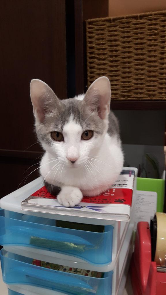 大募集キャンペーン 猫ちゃんのショートステイ・・