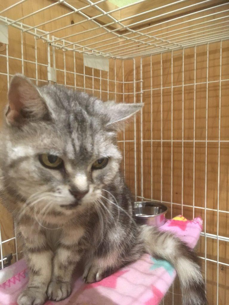 猫のみーこちゃんは16歳 長期お預かり中 !