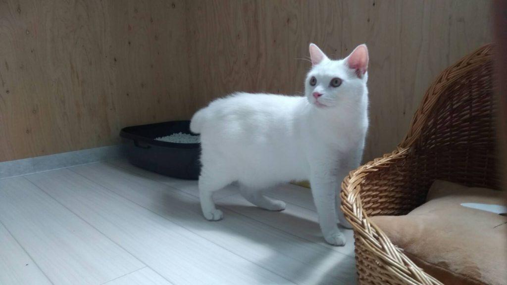生涯預かりの猫 ナユタちゃんがやって来た。