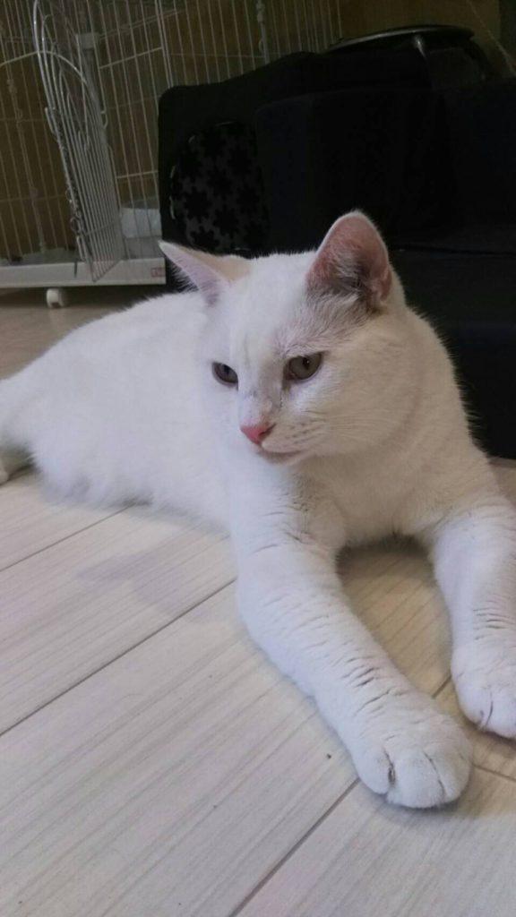 白猫・なーちゃんはイケメン