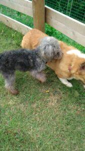 犬・マンディーとザックちゃんのある日