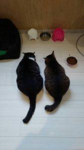 生涯お預かり中の猫ちゃんたち 朝のお食事風景