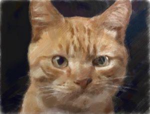 愛犬愛猫のお写真加工いたします。