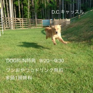 ドッグラン 犬のお預かり 浜松市のD.Cキャッスル