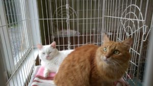 猫ゲージの仲良し猫友