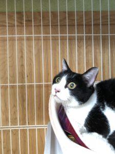 猫・生涯預かり・浜松市 猫のももこちゃん