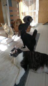 猫舎、ドッグランの昼下り