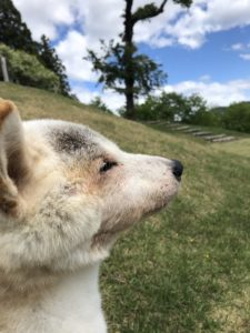 犬、猫の長期療養型ホテル
