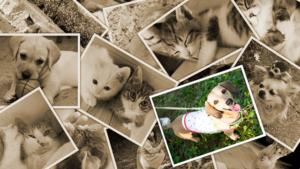 犬・猫・ペットの火葬は思い出の詰まったご自宅で・・