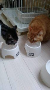 猫ちゃん❤仲良し朝ご飯!!