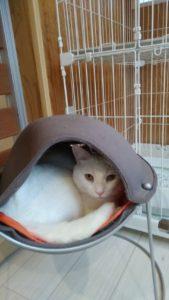白猫・3歳・なーちゃん