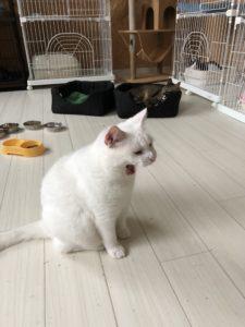 横顔がチャーミング❤猫ちゃん