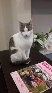 保護猫のノンちゃんは・3歳に!!