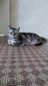 にゃん猫にゃんこ❤D.C.キャッスル❤❤❤