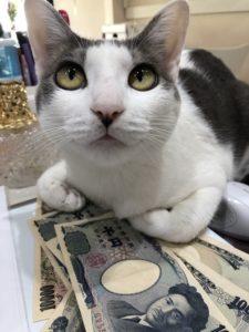 猫に小判ならぬ猫にお札